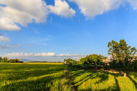 Guandong Kaiping Pastoral Scenery
