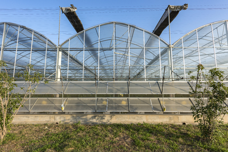 Greenhouse planting Editorial