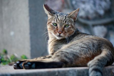 The green eyes cat