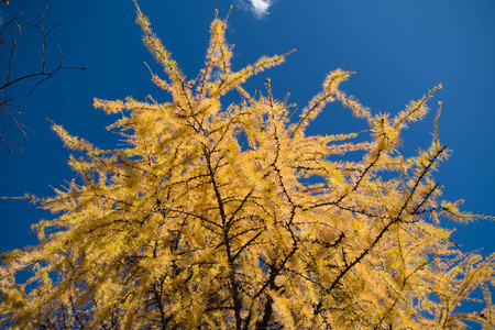 The autumn trees and the blue sky