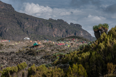 senecio: The campsite at Barranco with a number of large Senecio trees in the foreground Stock Photo