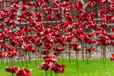 A field of remembrance poppies