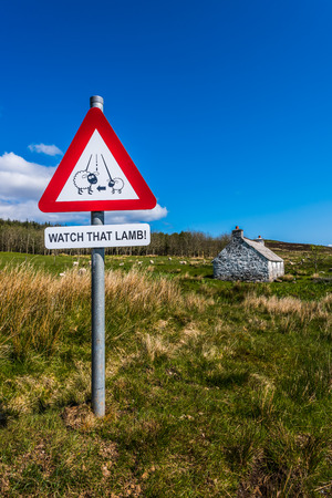 sheep road sign: A sign post at the edge of a road during the lambing season in Scotltish Highlands