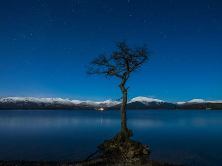 A lone tree at Milarrochy Bay on the shores of Loch Lomond, near the village of Balmaha, Scotland, UK.