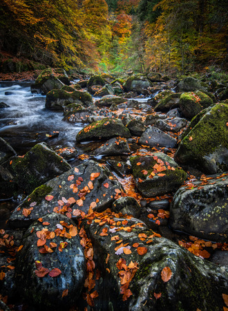 The autumn colours at the Hermitage on the River Braan near Dunkeld in Perthshire Stock Photo