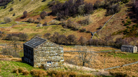 Swaledale in the Yorkshire Dales National Park Its upper parts are particularly striking because of its large old limestone field barns , stone walls and its profusion of wild flowers