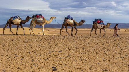 A Trekking adventure through the Sahara desert using a caravan of camels to transport our heavy gear between campsites