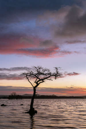 A sunset at the Picturesque Lone Tree at Milarrochy Bay on Loch Lomond, near the village of Balmaha, Scotland.
