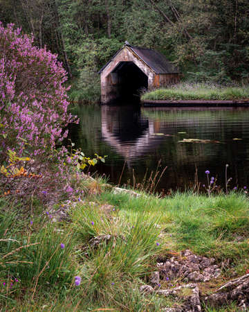 Purple heather growing near the old boathouse on the banks of a calm on Loch Chon in the Trossachs National Park, Scotland Archivio Fotografico