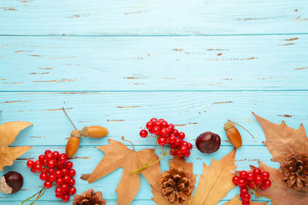 Autumn composition on blue. Acorn, pine cone, anise star on blue background