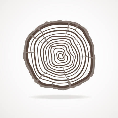rings on a tree: Vector illustration tree rings and bark isolated on white  background. Flat Design Illustration