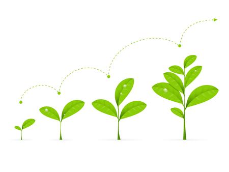 crecimiento planta: Fases planta verde que crece. Ilustración del concepto de Desarrollo del vector
