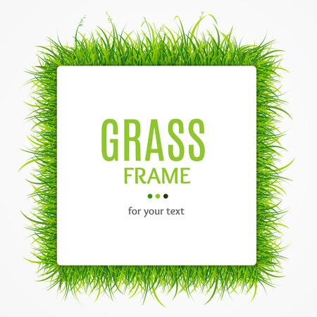 bright: Green Grass Frame. Vector