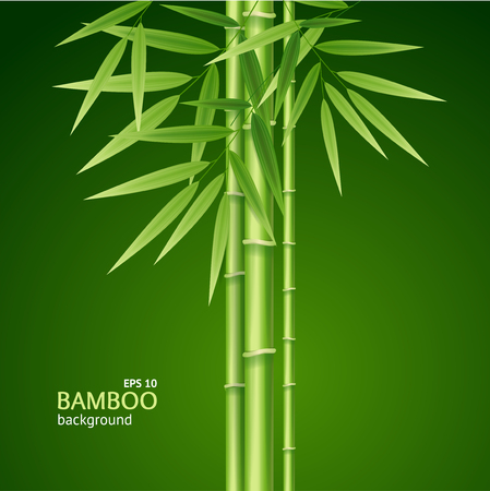 Realistic 3d Detailed Bamboo Shoots Background Card. Vector