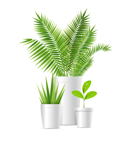 Realistic Detailed 3d Vibrant Green House Plant Pot Set Concept Element Comfort. Vector illustration of Houseplant Potted