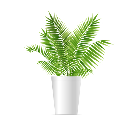 Realistic Detailed 3d Houseplant Green Palm Symbol of Relax and Resort. Vector illustration of Tropical Exotic Plant Foto de archivo - 110480923