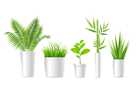 Realistic Detailed 3d Green Houseplant Set Cultivate Fresh Greenery in Ceramic Container. Vector illustration of House Plant