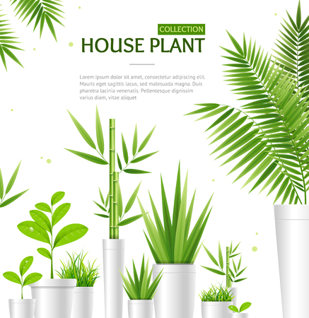 Realistic 3d Detailed House Plant Concept Banner Card Include of Tropical Palm and Bamboo in Pot. Vector illustration