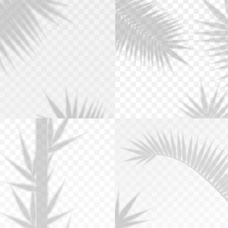 Bamboo and Palm Branches Leaves Overlay Effect Transparent Shadow Set. Vector Vetores