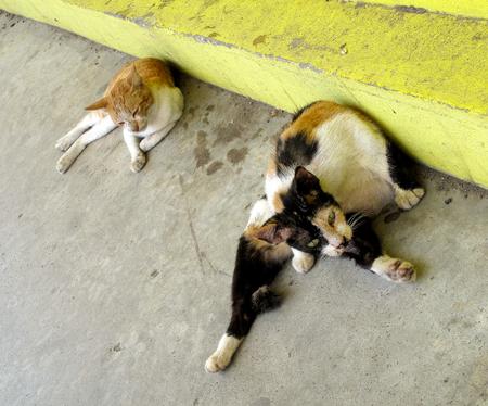 Dirty Street Cats