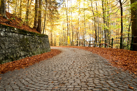 stone wall: Brick road in the forest Stock Photo