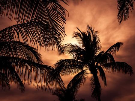tree silhouette: Palm trees silhouette