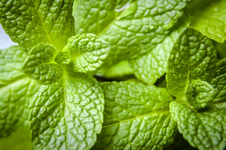 green plants: Macro shot of green mint leaves in raw, natural state