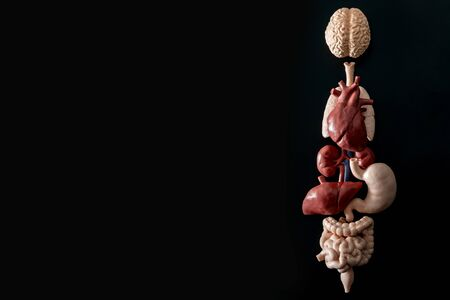 Human anatomy, organ transplant and medical science concept with a collage of human organs in anatomically correct position like brain, heart, liver, etc, isolated on black background with copy space
