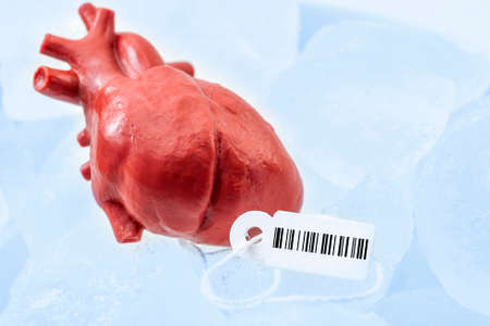 Human organ traffic, internal organs black market and illegal medical procedure concept theme with frozen donor heart with tag and barcode attached, preserved on ice ready for transplant surgery Stockfoto - 152597894