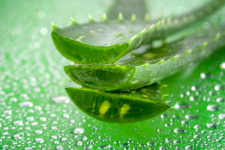 Natural beauty products and plant based clinical treatment concept with macro close up on an aloe vera plant leaf and gel isolated on wet green background soaked in water drops with copy space