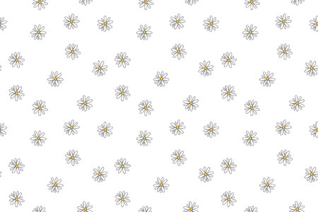 Oxeye Daisy, chamomile National flower of Denmark, Russia and Latvia. Illustration