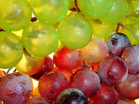 Red and green grape (Close-up back-light) Stock Photo - 352161