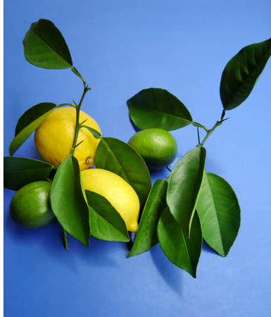 Citrus su sfondo blu tessitura Archivio Fotografico