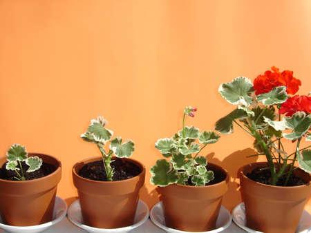 porgere: Le imprese come i fiori crescono pi� grande in base al loro ritmo  Archivio Fotografico