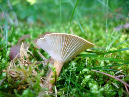Moss and Mushroom (Close-up)
