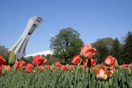 Tower of Olympic stadium of Montreal and tulip from botanical garden.