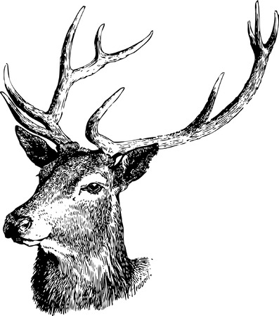 Deer illustration black and white vector. 일러스트