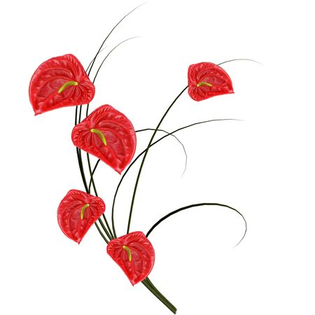 Red anthurium with branch on white background.