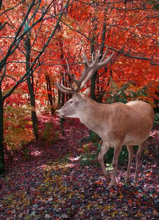 A dark forest in autumn with wild deer. Banco de Imagens