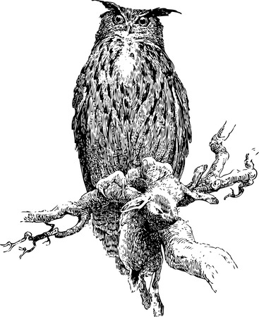 Owl. Stok Fotoğraf - 4463251