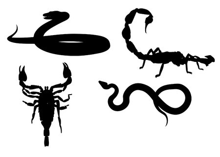Snake and scorpio. Çizim