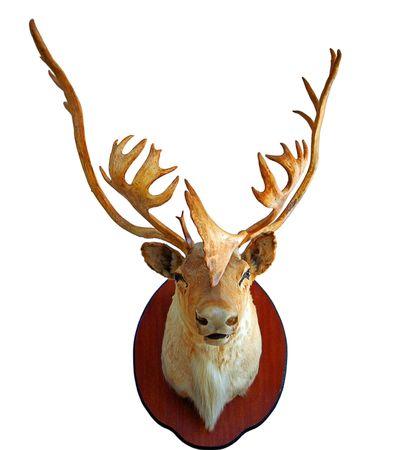 Deer trophy.