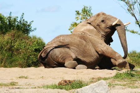 elephant wake up.