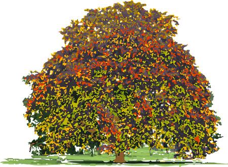 Grote boom in de herfst geïsoleerd op een witte achtergrond. Stockfoto - 5601422