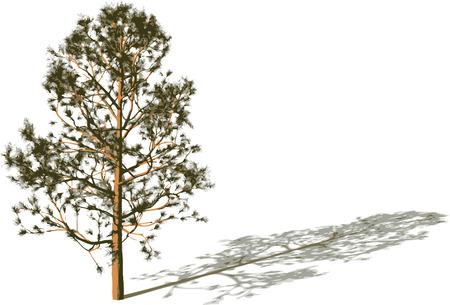 Tree Silhouette d'ombre. Banque d'images - 5673799