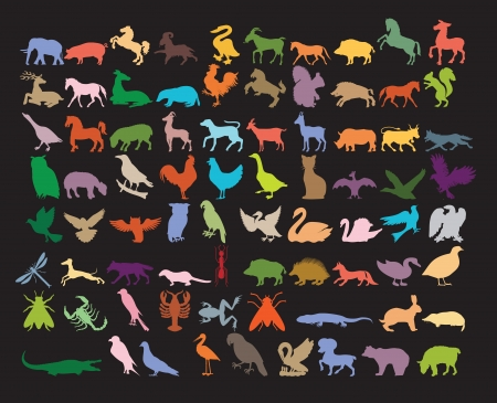 Big variety of animals with different colors to please children.  Ilustração
