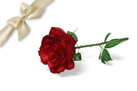 Red Rose 版權商用圖片