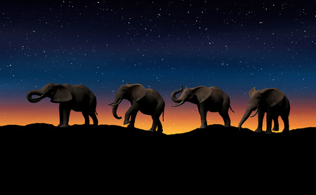 Elephant in africa.