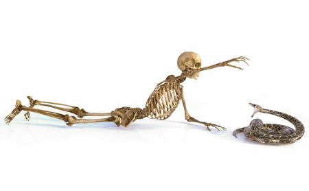 The skull and the snake. 版權商用圖片