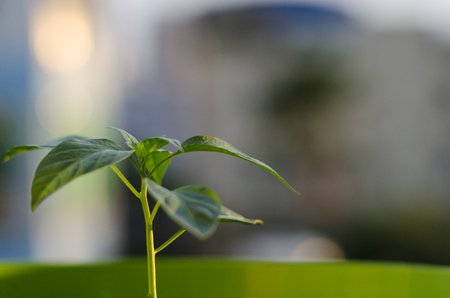 Small young green plant with blurred background